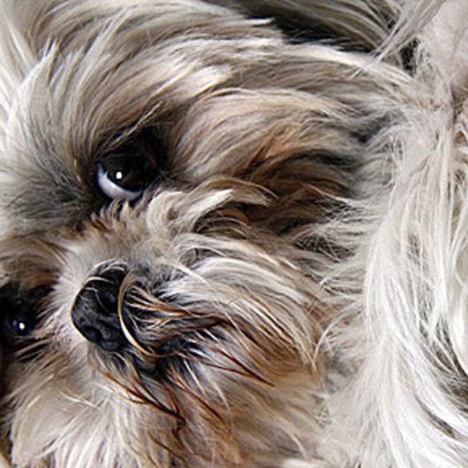 Cuidados sobre el pelaje de los perros