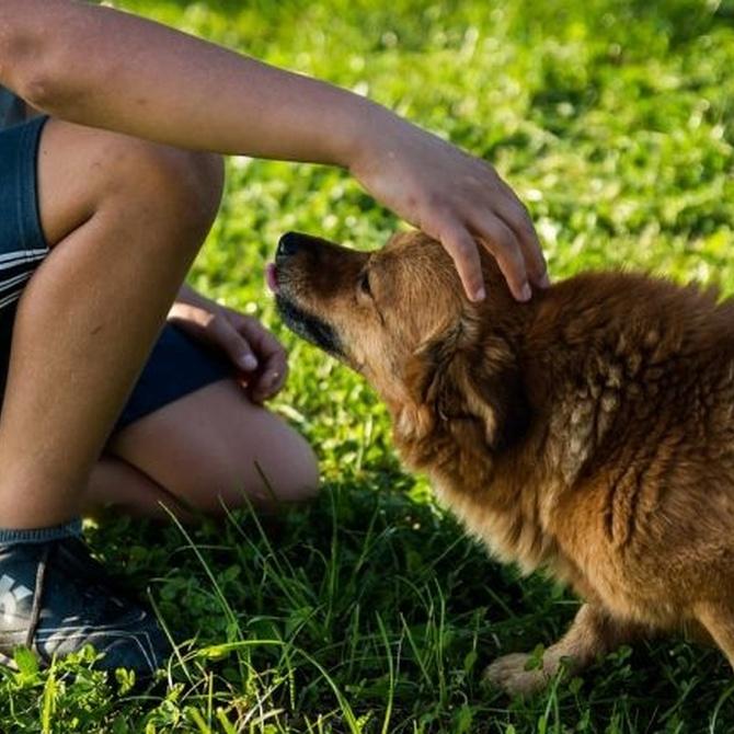 Consejos para cuidar a tu perro