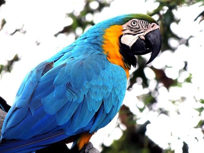 Enfermedades digestivas de las aves (I)