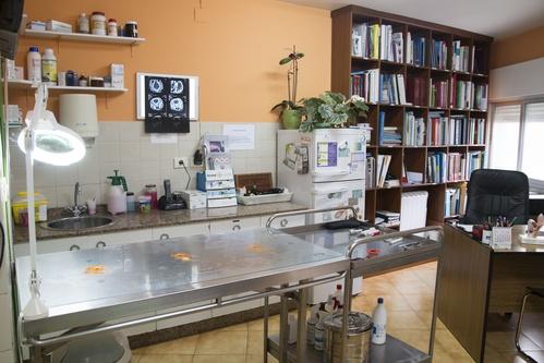 Fotos de Veterinarios en Vilanova de Arousa | Clínica Veterinaria Vilanova