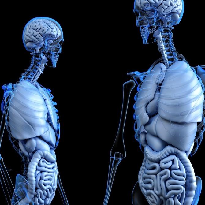 Prótesis de cadera: en qué consiste y cómo saber si necesitas una