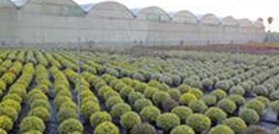 Viveros de plantas en Valencia y de arbustos decorativos