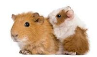 Productos de alimentación y accesorios para roedores