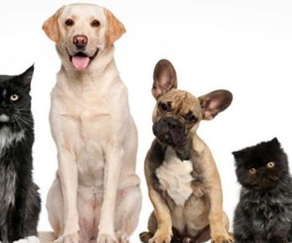 Clínica veterinaria en Soto del Real | Centro Veterinario Chozas de la Sierra