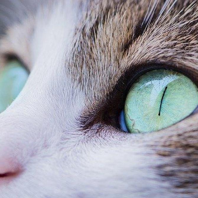 Curiosidades de los gatos que pocos conocen