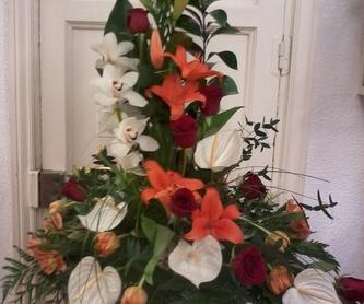 Ramos de dama: Catálogo de Flores de Sala - Floristería
