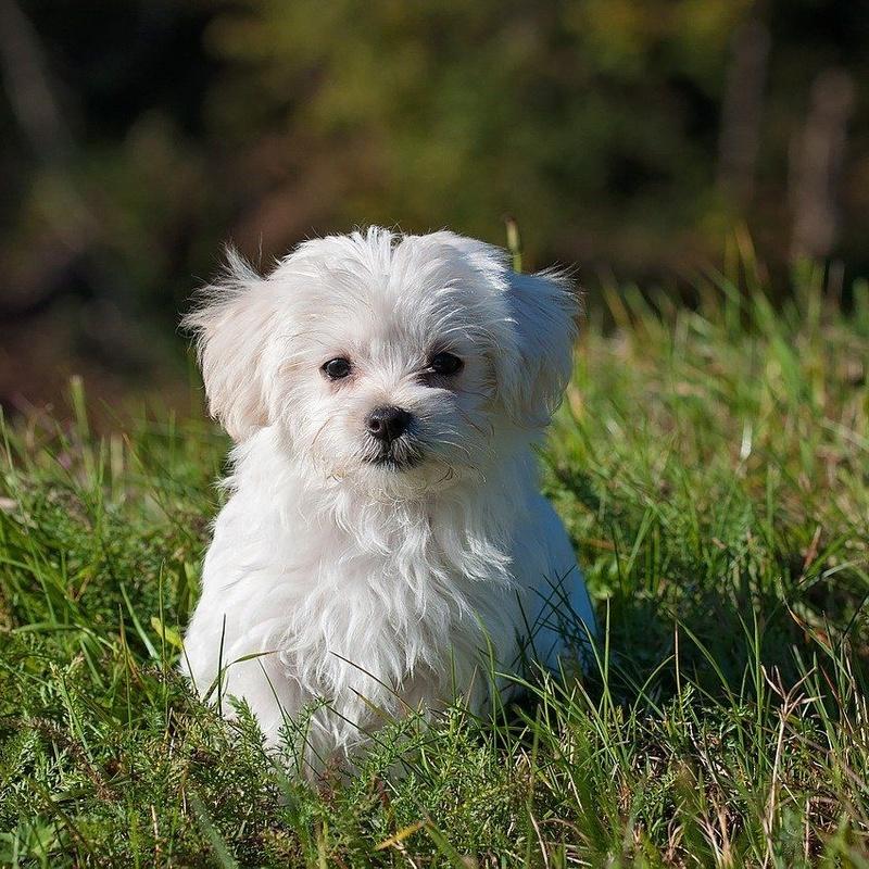 Peluquería canina y felina: Servicios de El Ca Rosa