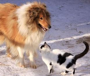 Razones para castrar a perros y gatos