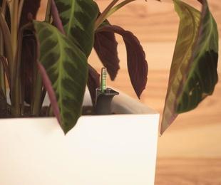 Doctor en plantas
