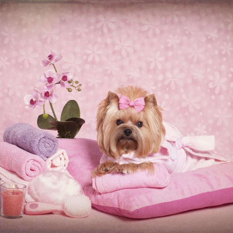 Peluquería canina y felina: Productos y Servicios de Mundo Mascota
