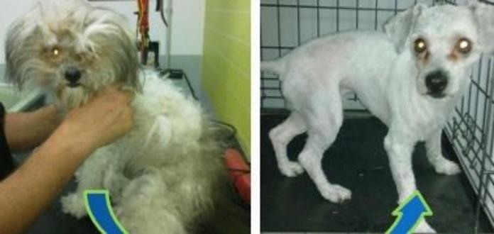 Peluquería canina y felina: Productos y servicios de Veterinario El Puertito