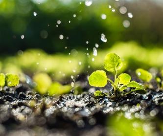 Diseño y mantenimiento de jardines: Servicios de ARROYO LORCA JARDINERIA