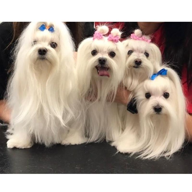 Peluquería y estilismo: Productos y servicios de Academia de Estética Canina Woof Meow