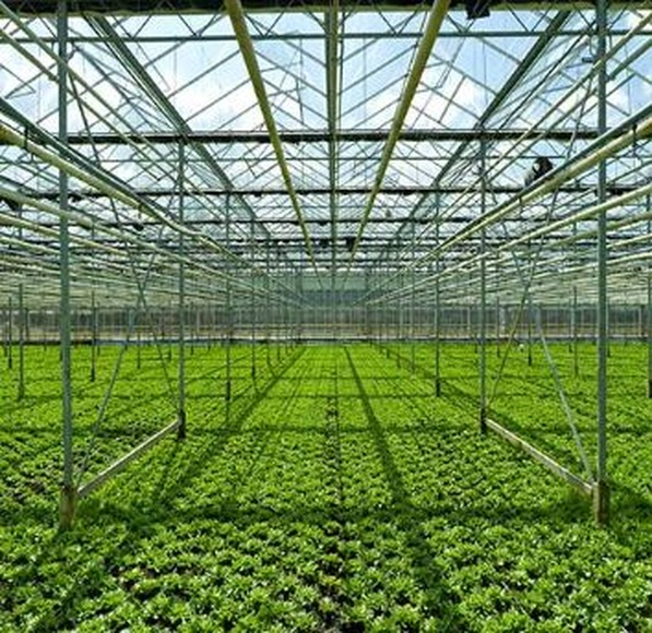 Riego: Servicios de Global Invernaderos Greenhouse