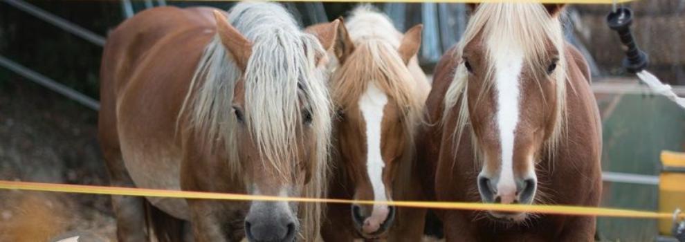 Hípica y equitación en (Les Fonts) | Hípica Can Buimira