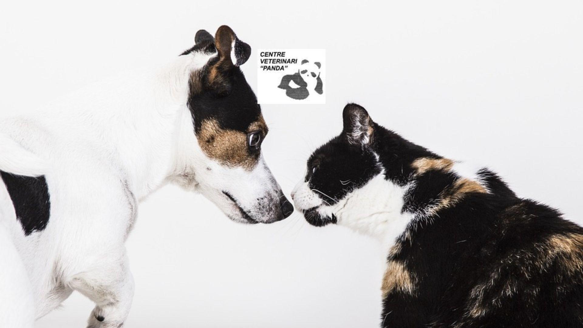 veterinario de mascotas
