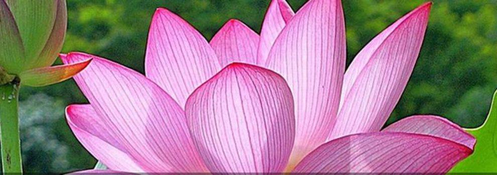 Envío de flores a domicilio en Rivas Vaciamadrid | Carden Rivas