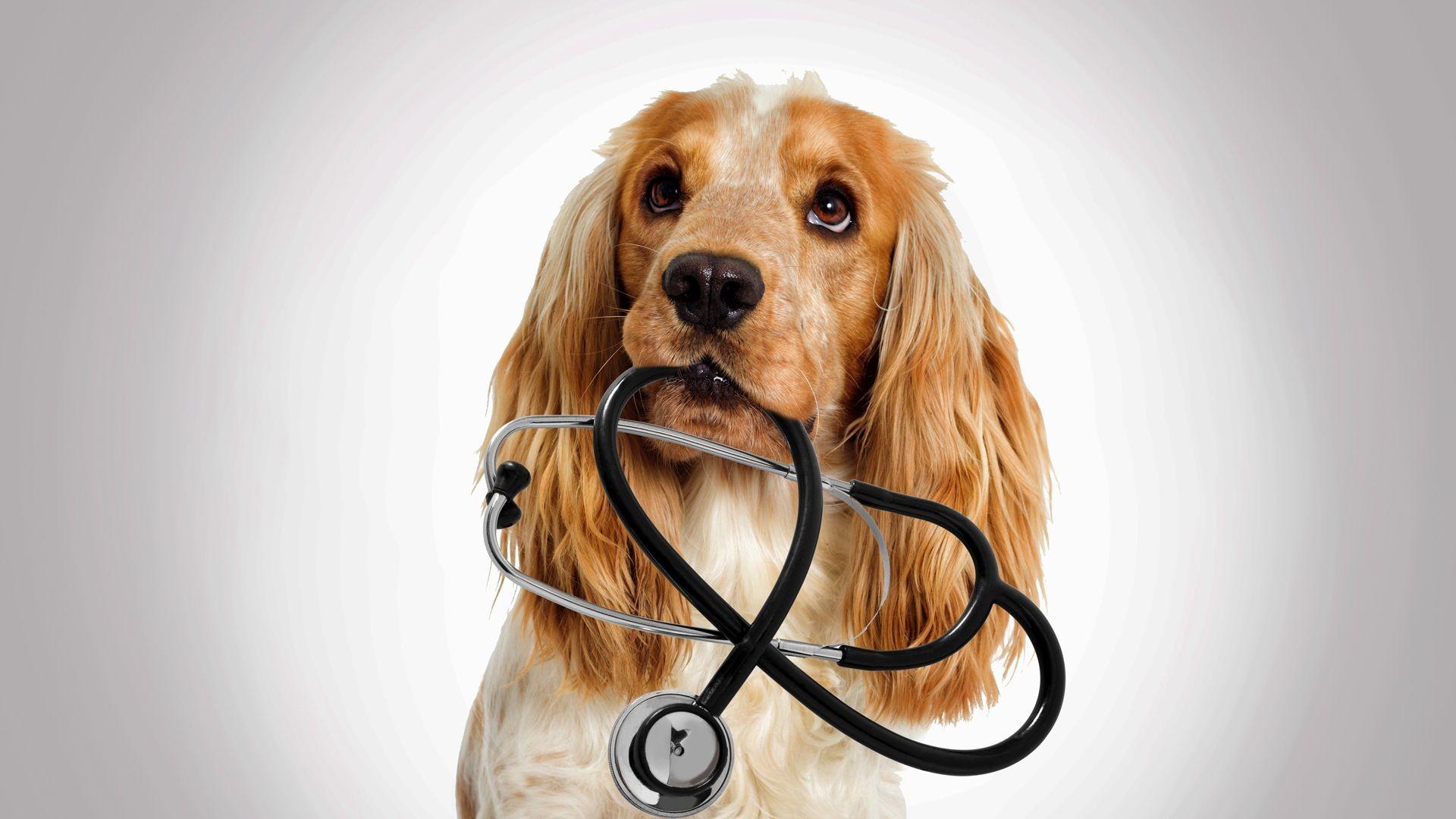 Clínica veterinaria Pineda de Mar