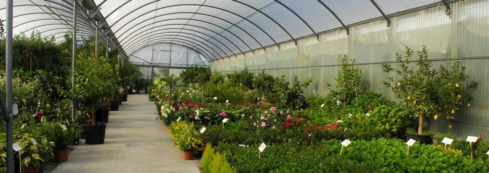 Empresas de jardiner a en boadilla del monte for Empresas de jardineria