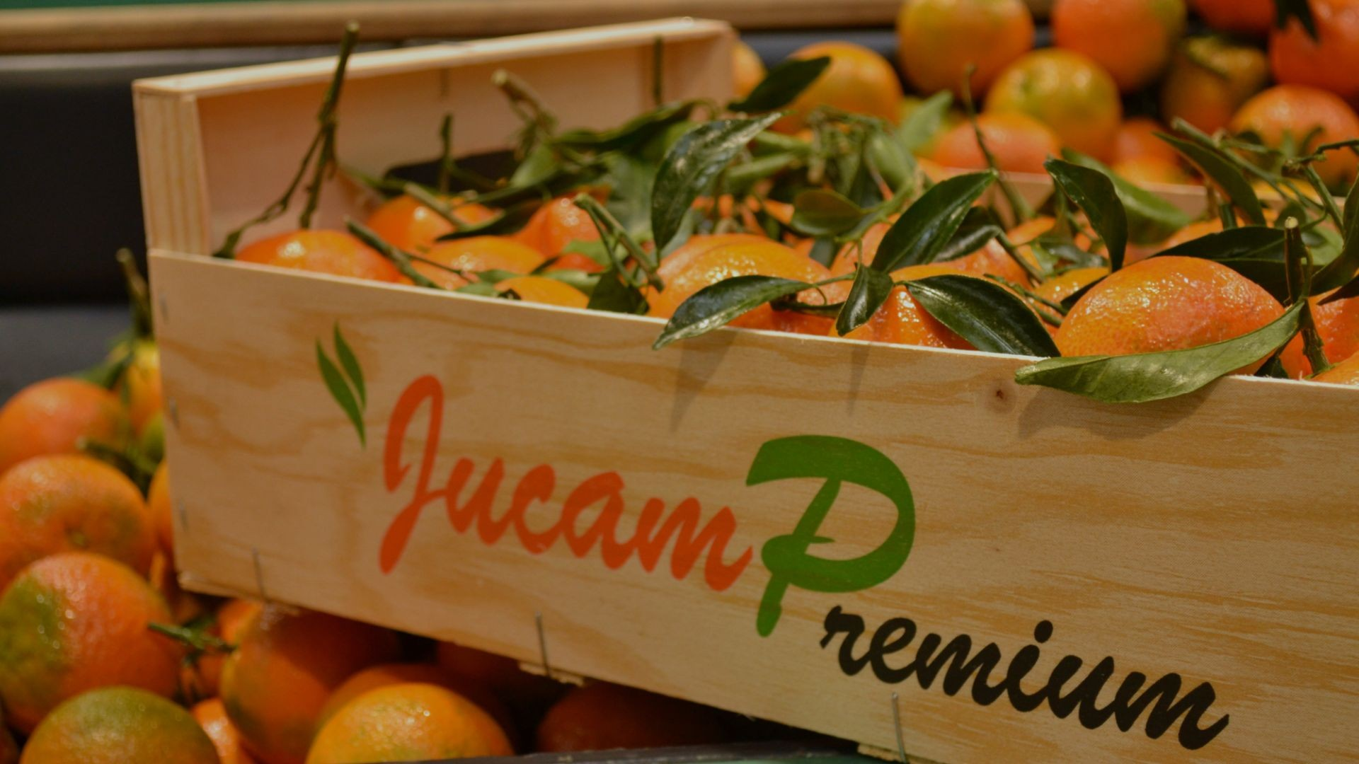 Jucamp Premium