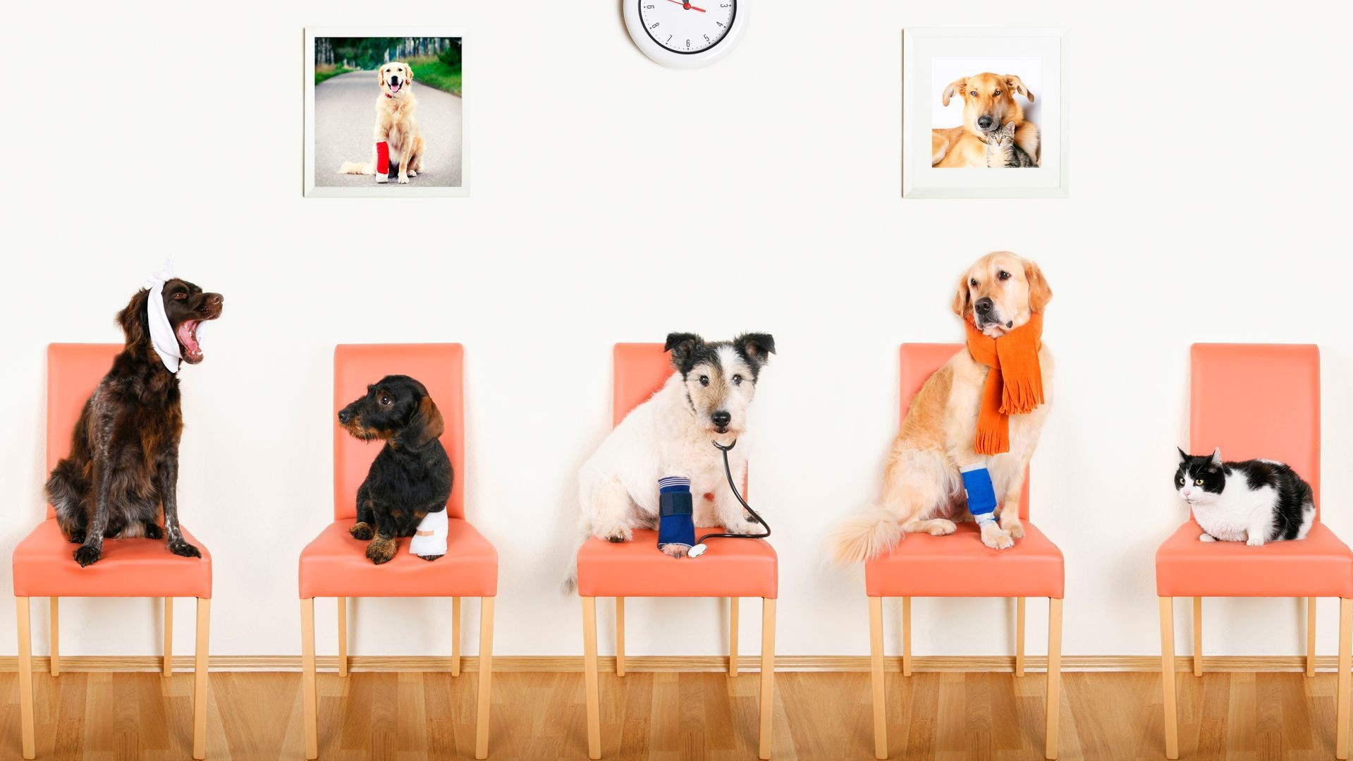 Clínica veterinaria en Usera