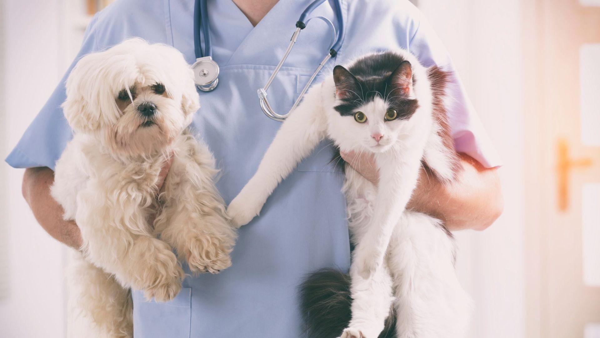 Laboratorios veterinarios en Málaga