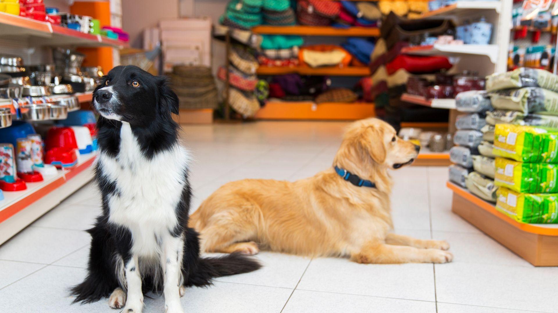 Tienda de productos para mascotas en Madrid