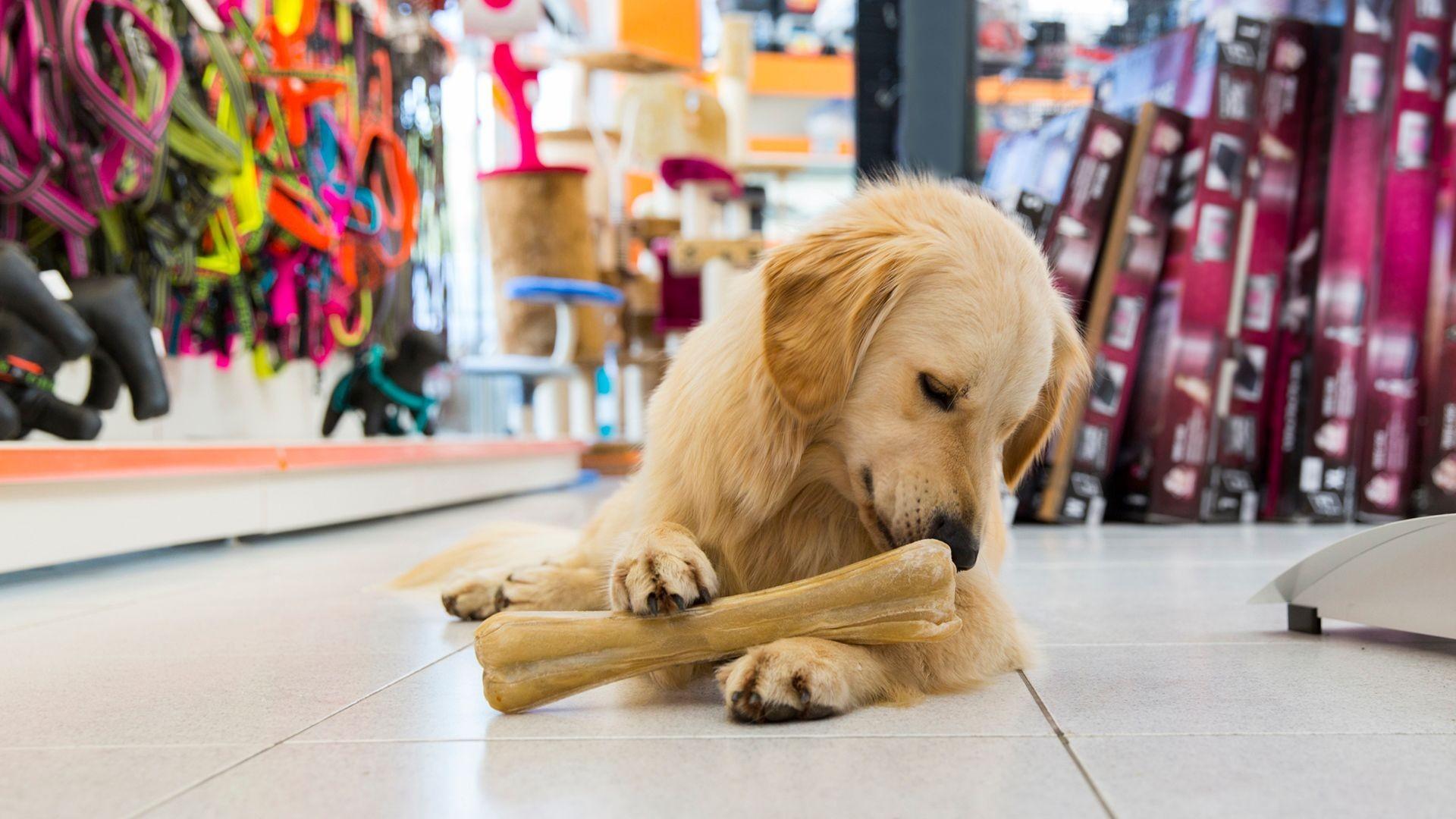 Tienda de productos para mascotas en Latina