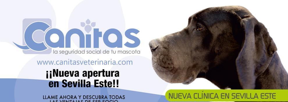 Veterinarios baratos en Sevilla | Canitas