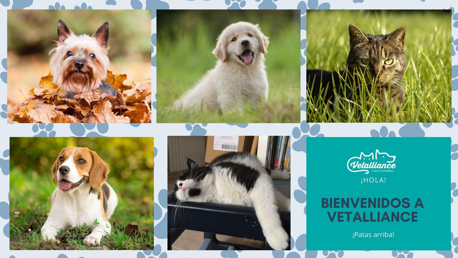 Copia de Naranja Perros Bonitos Mascota Foto Collage