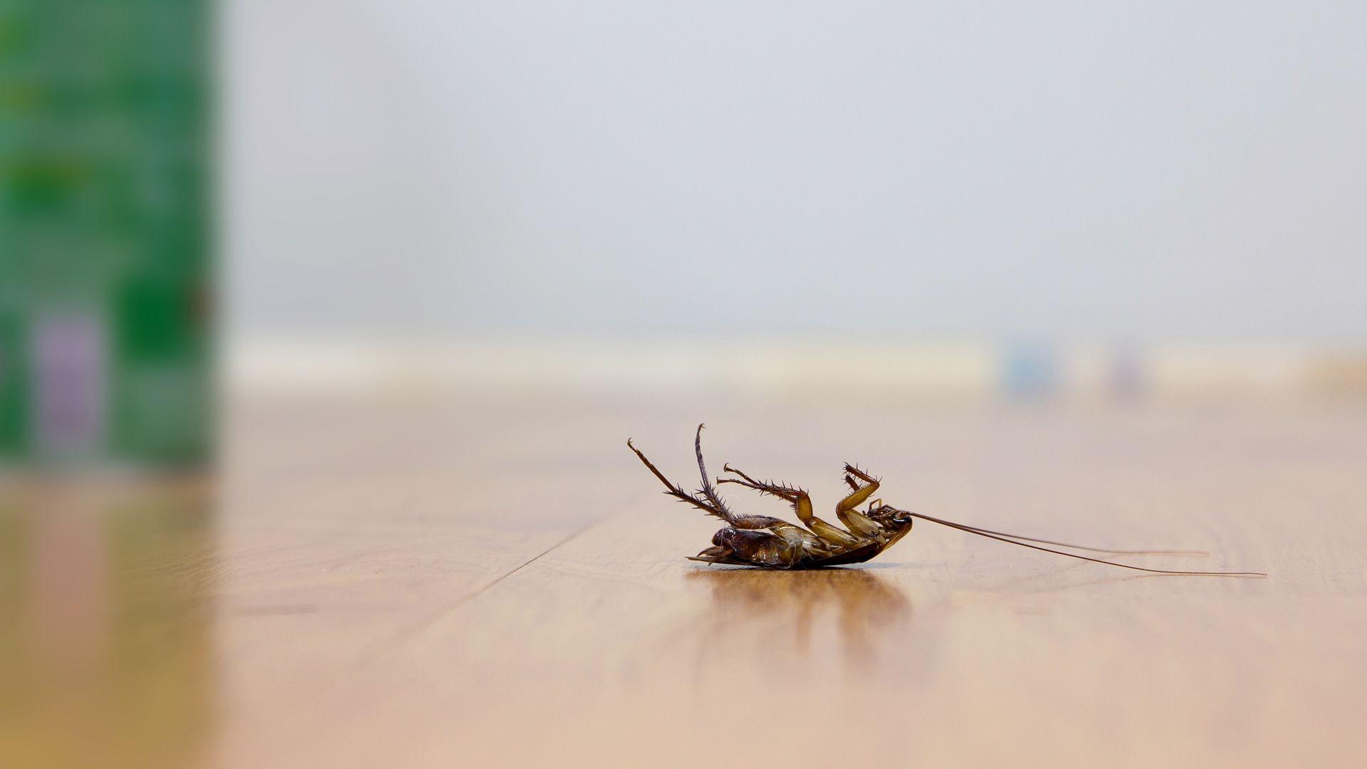 Eliminación de plagas de insectos en Zaragoza