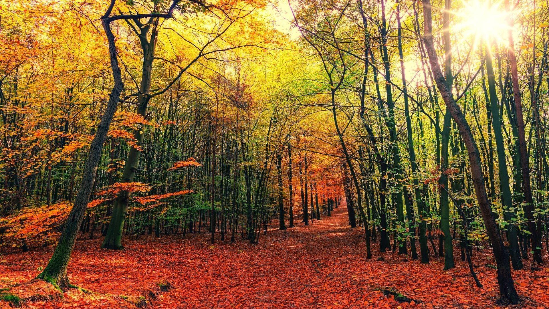 autumn-3804001_1920