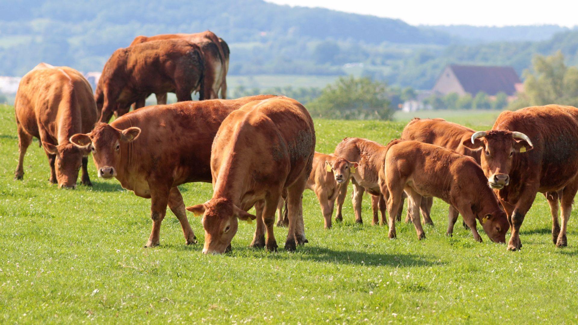 Venta de carne ecológica online en Tarragona