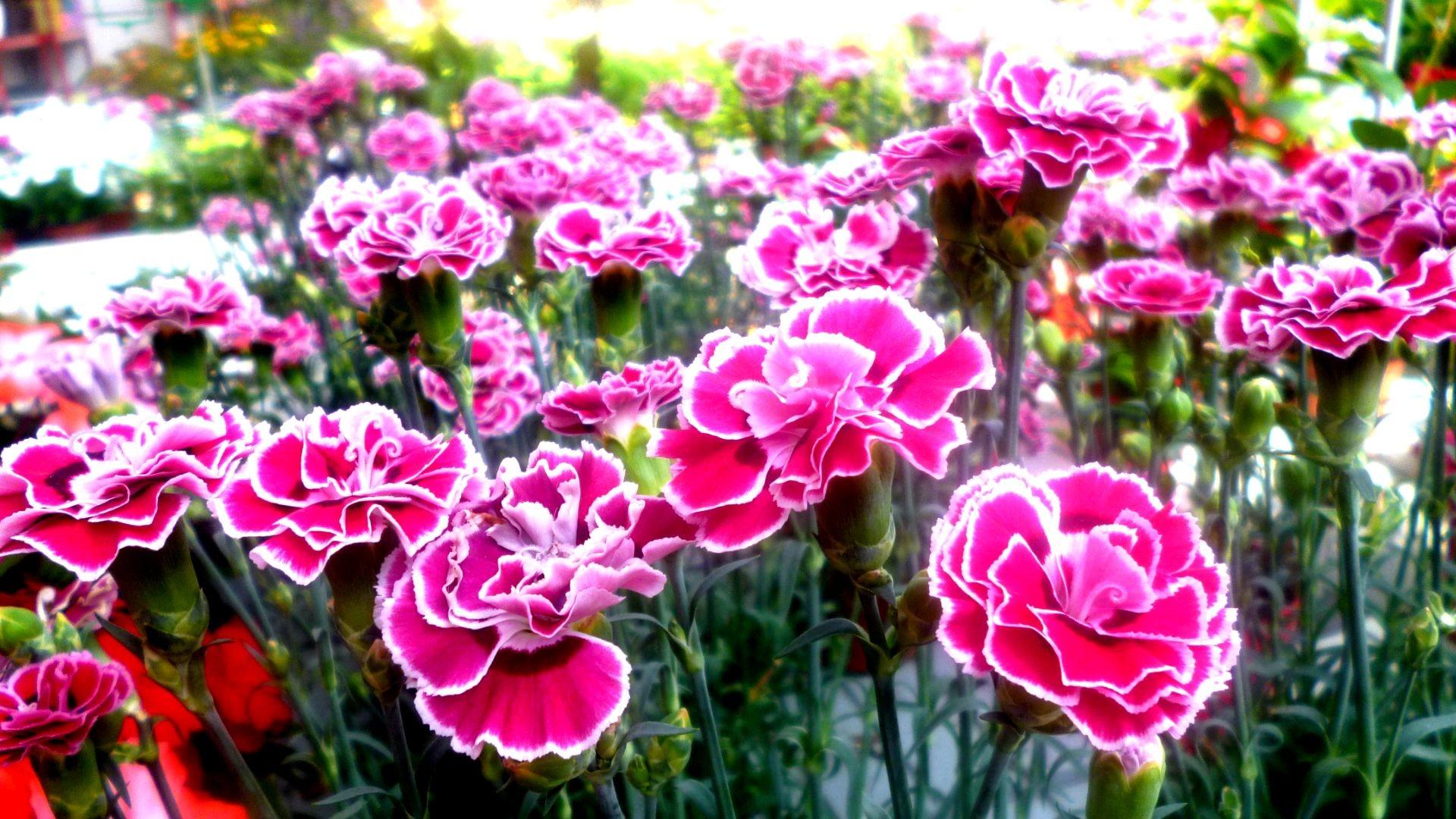 Trébol garden