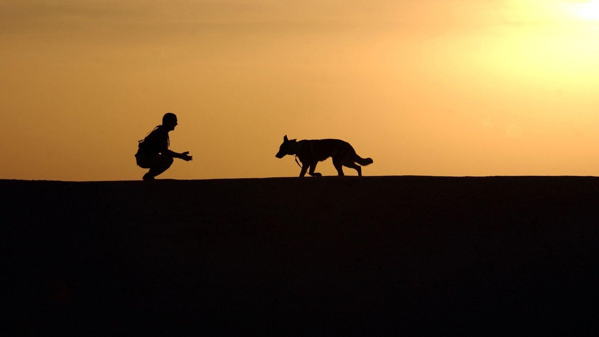 Entrenamiento de perros