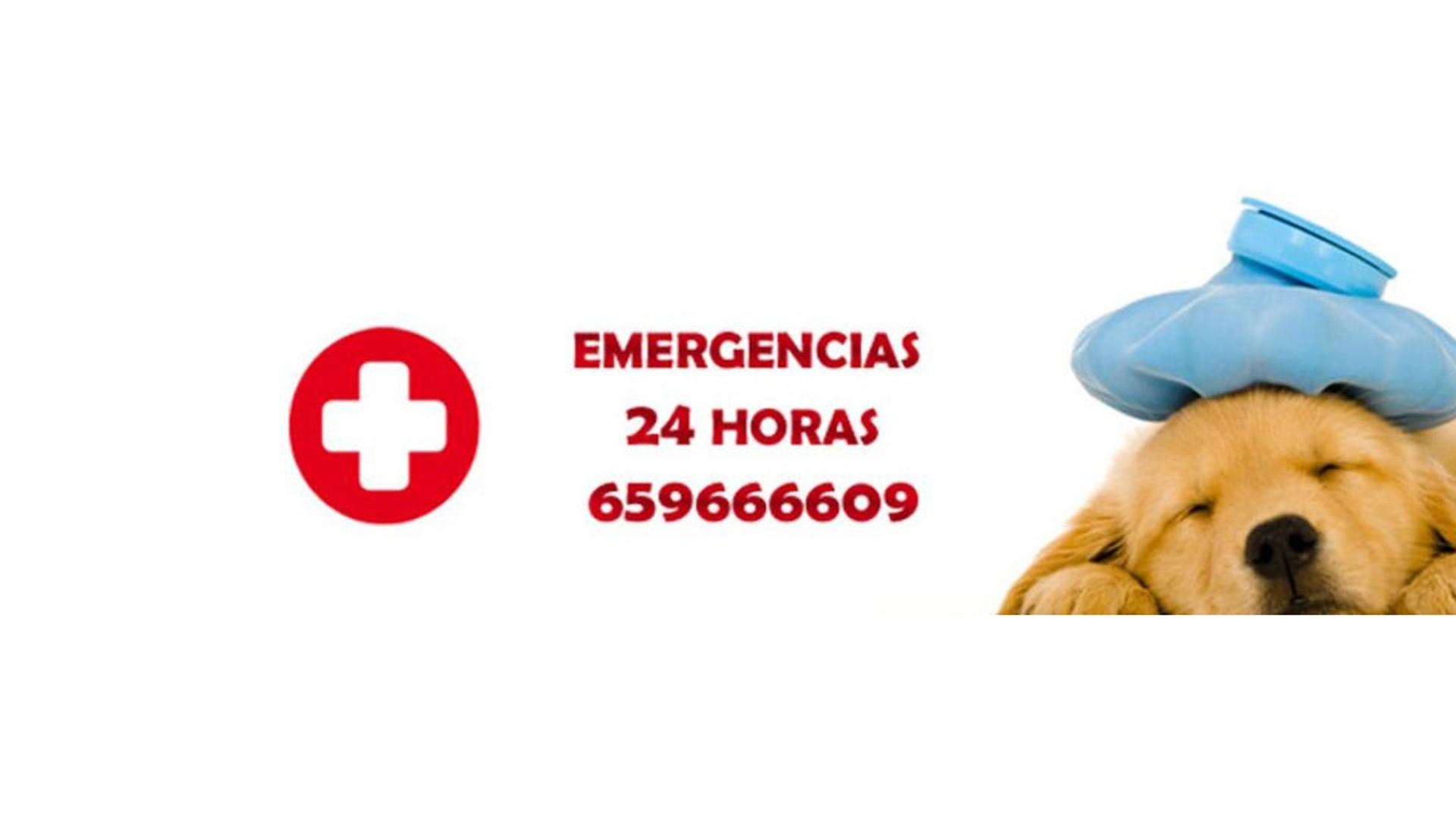 Urgencias Veterinaria San Vicente de Raspeig