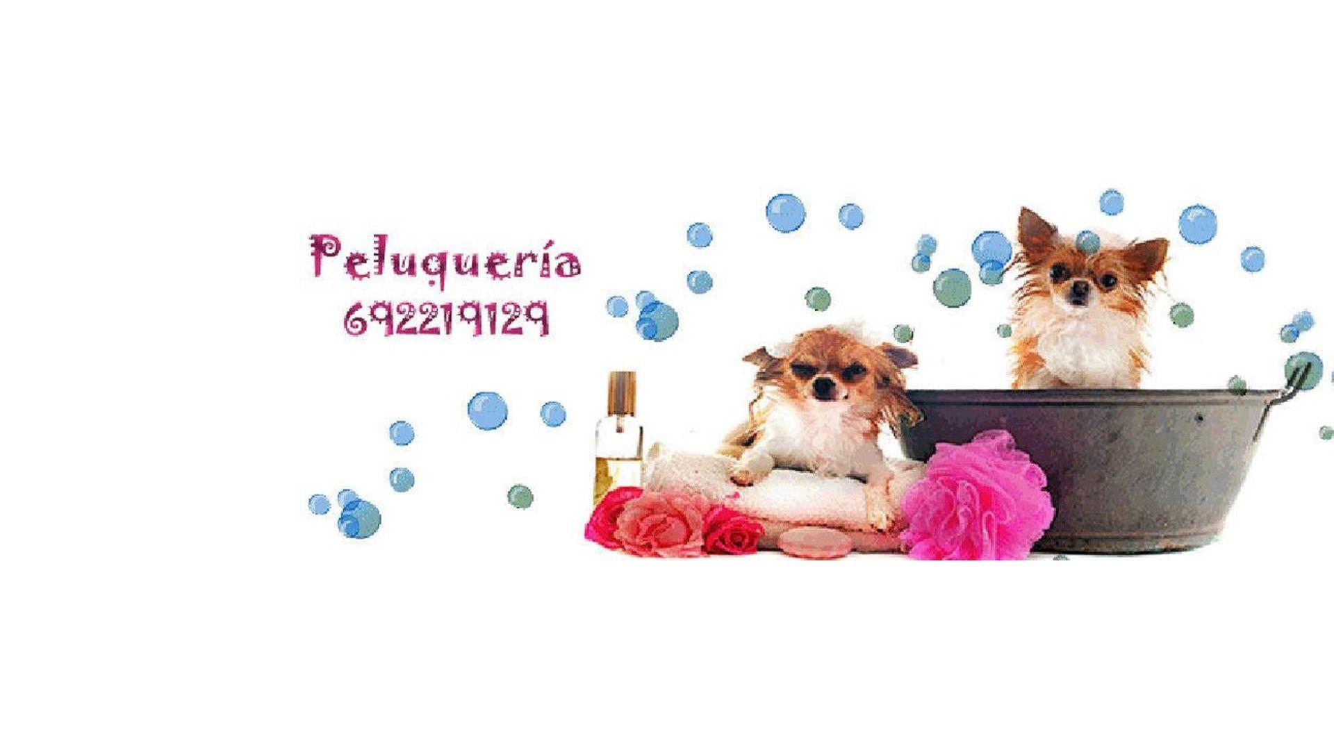 Peluquería canina San Vicente de Raspeig