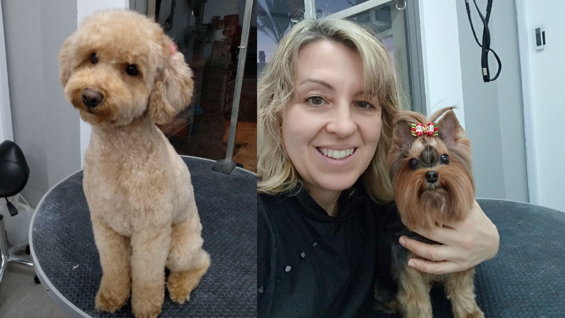 Adiestramiento, peluquería, complementos para perros en Aguadulce