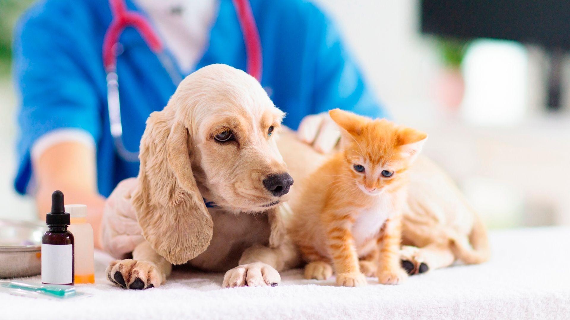 Clínica veterinaria Sant Feliu de Llobregat