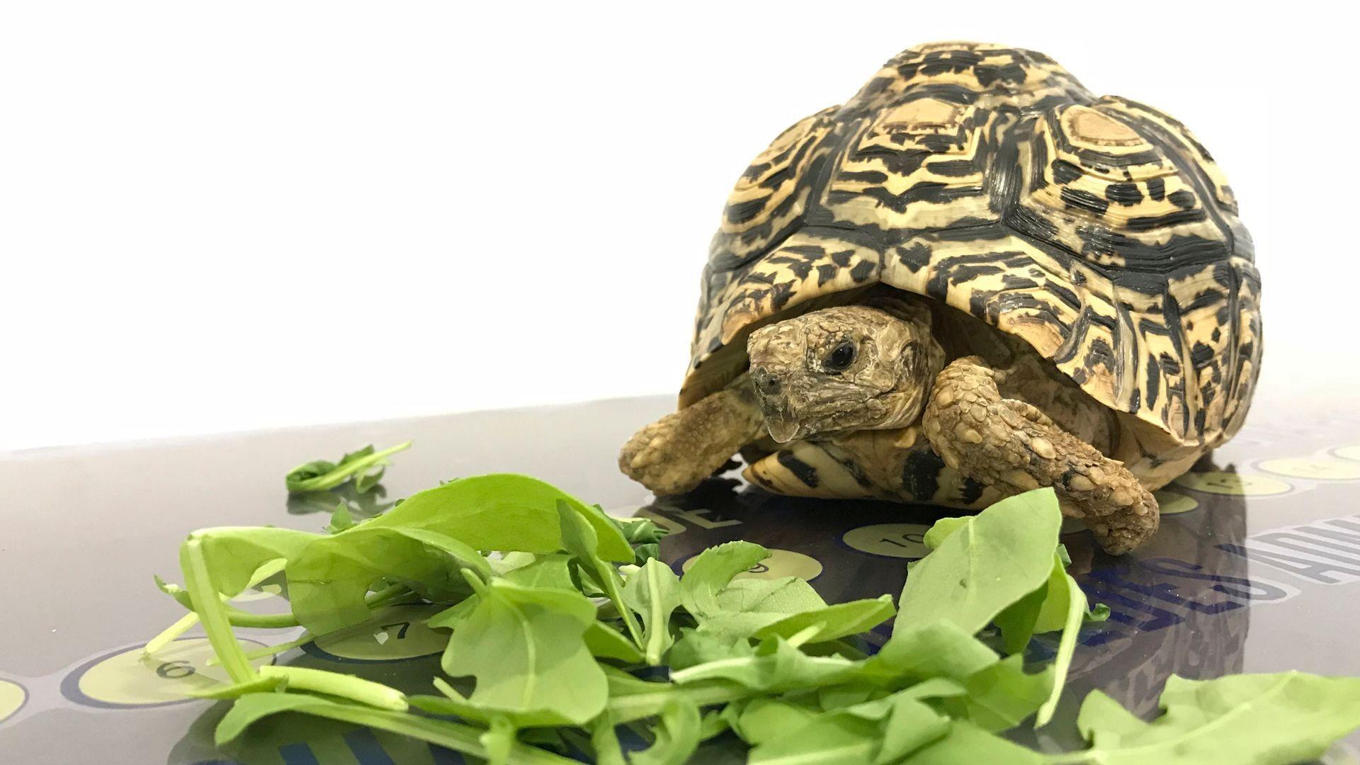Clínica veterinaria especializada en animales exóticos en Tenerife Sur