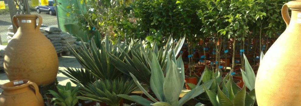 Viveros de plantas en Málaga