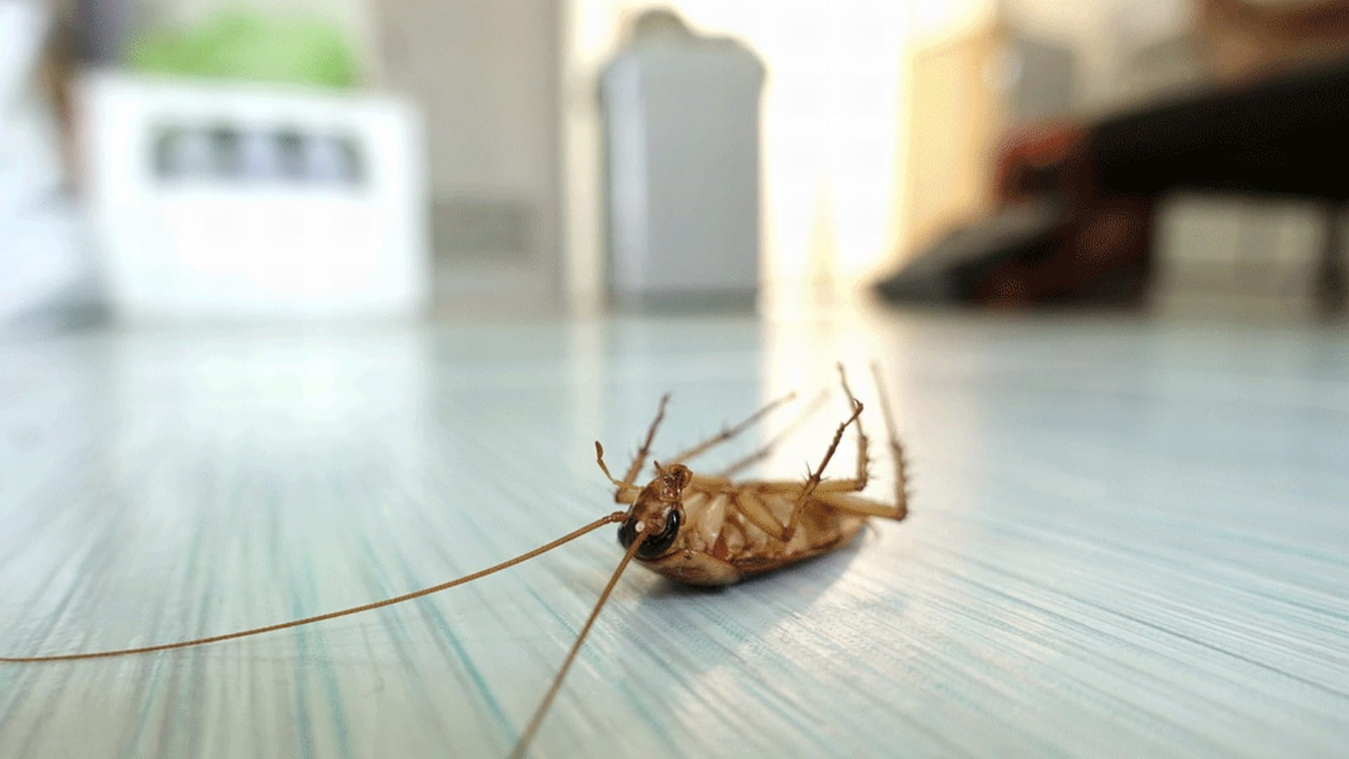 como matar cucarachas en casa