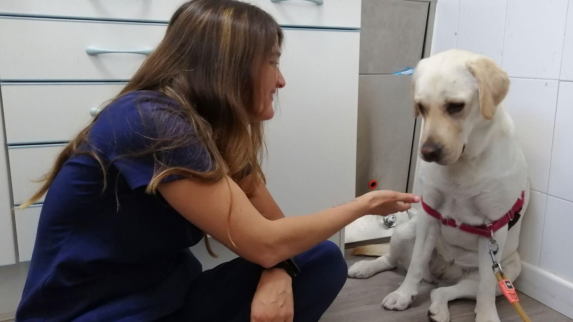 Veterinario especializado en perros en Leganés