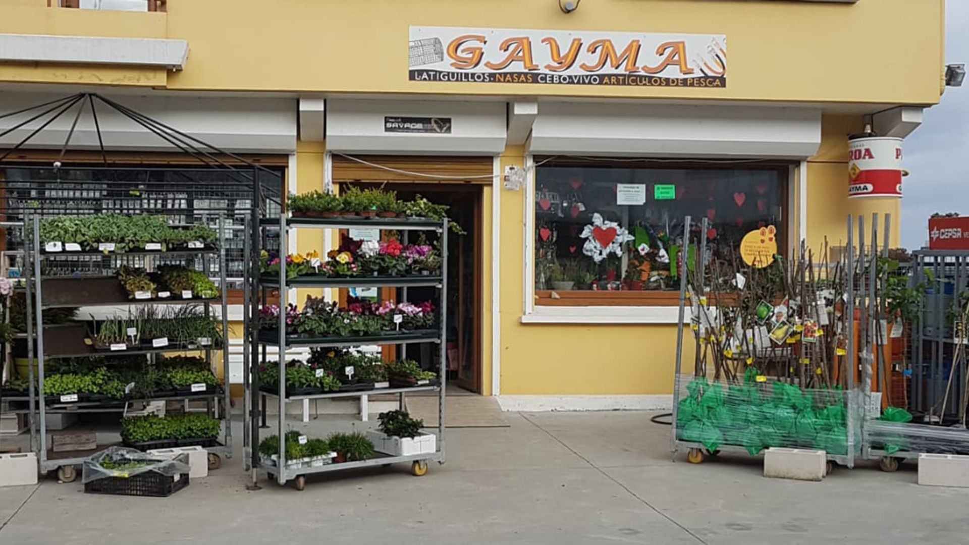 Gayma2