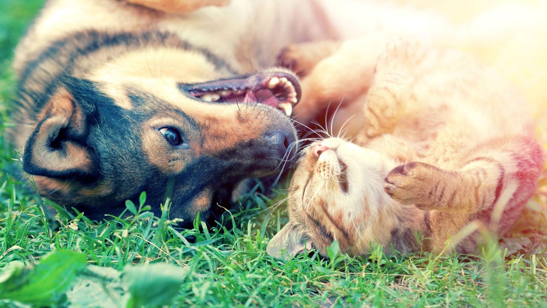 Venta de alimentos y accesorios para mascotas León