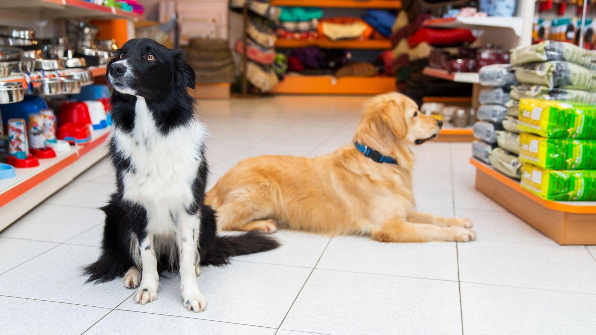 Tu tienda para mascotas en León