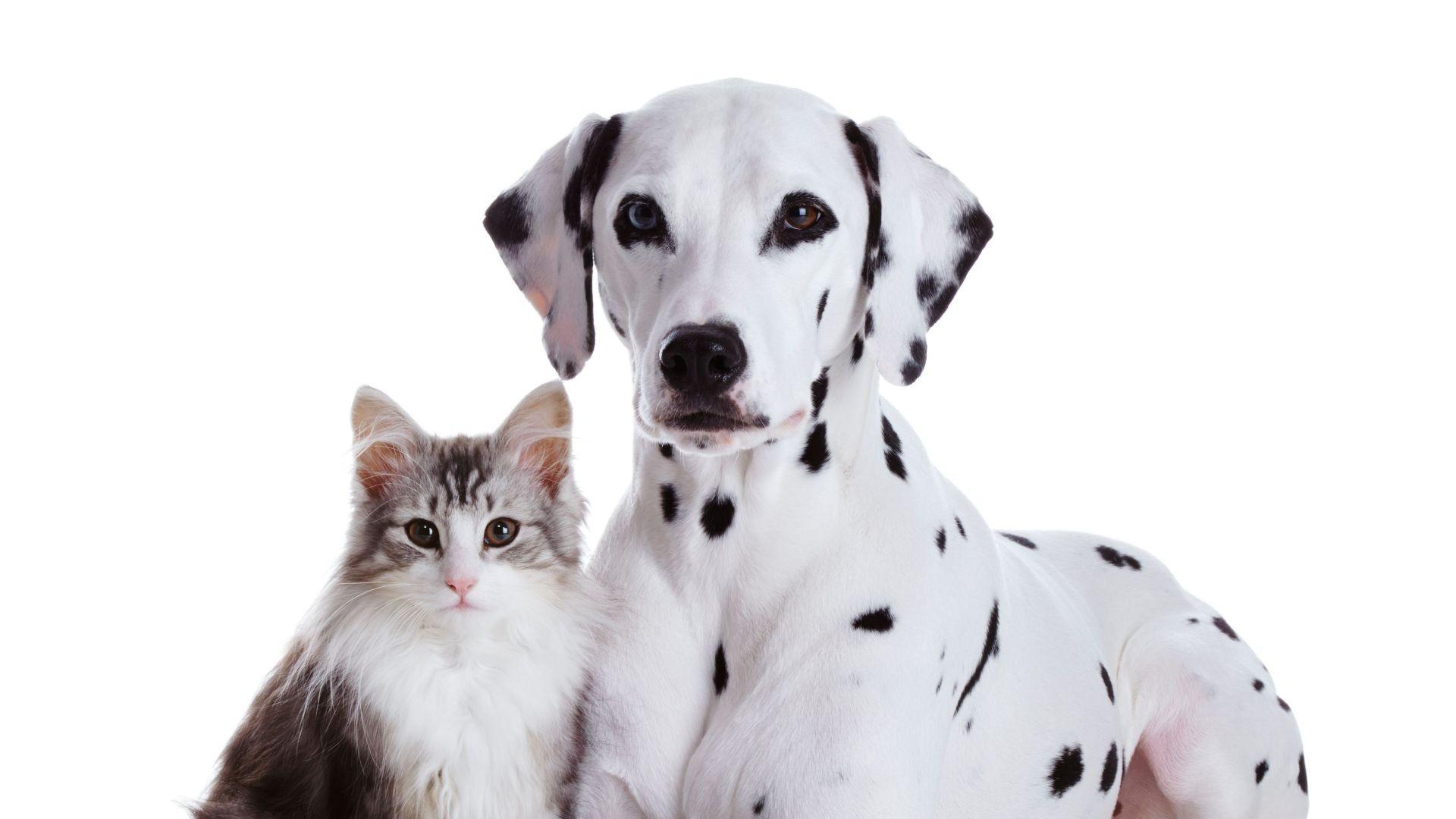 Guardería para perros y gatos en León