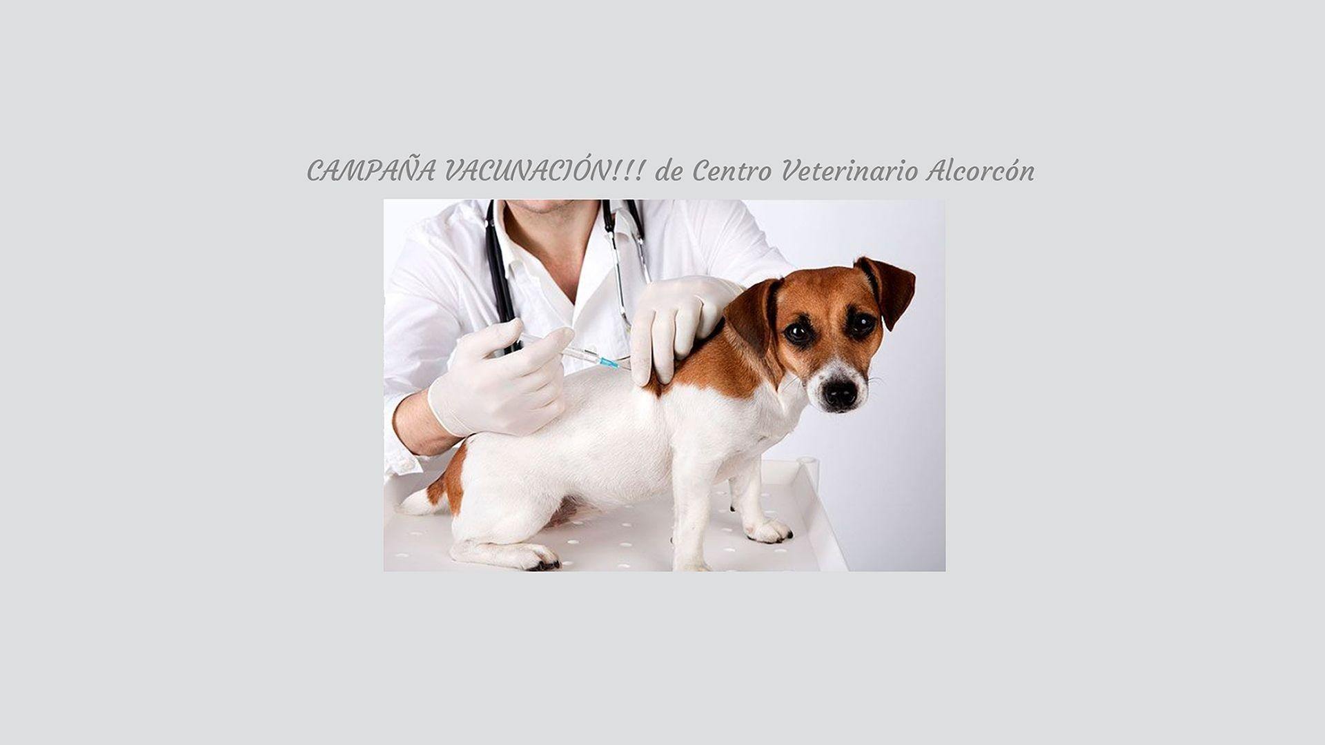 Vacunas animales Alcorcón