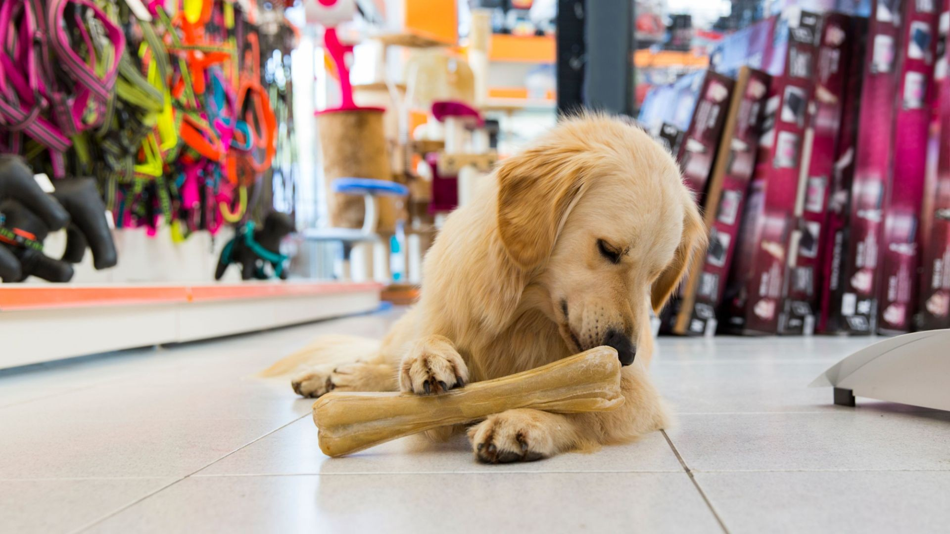 Tienda con productos para mascotas en Valladolid
