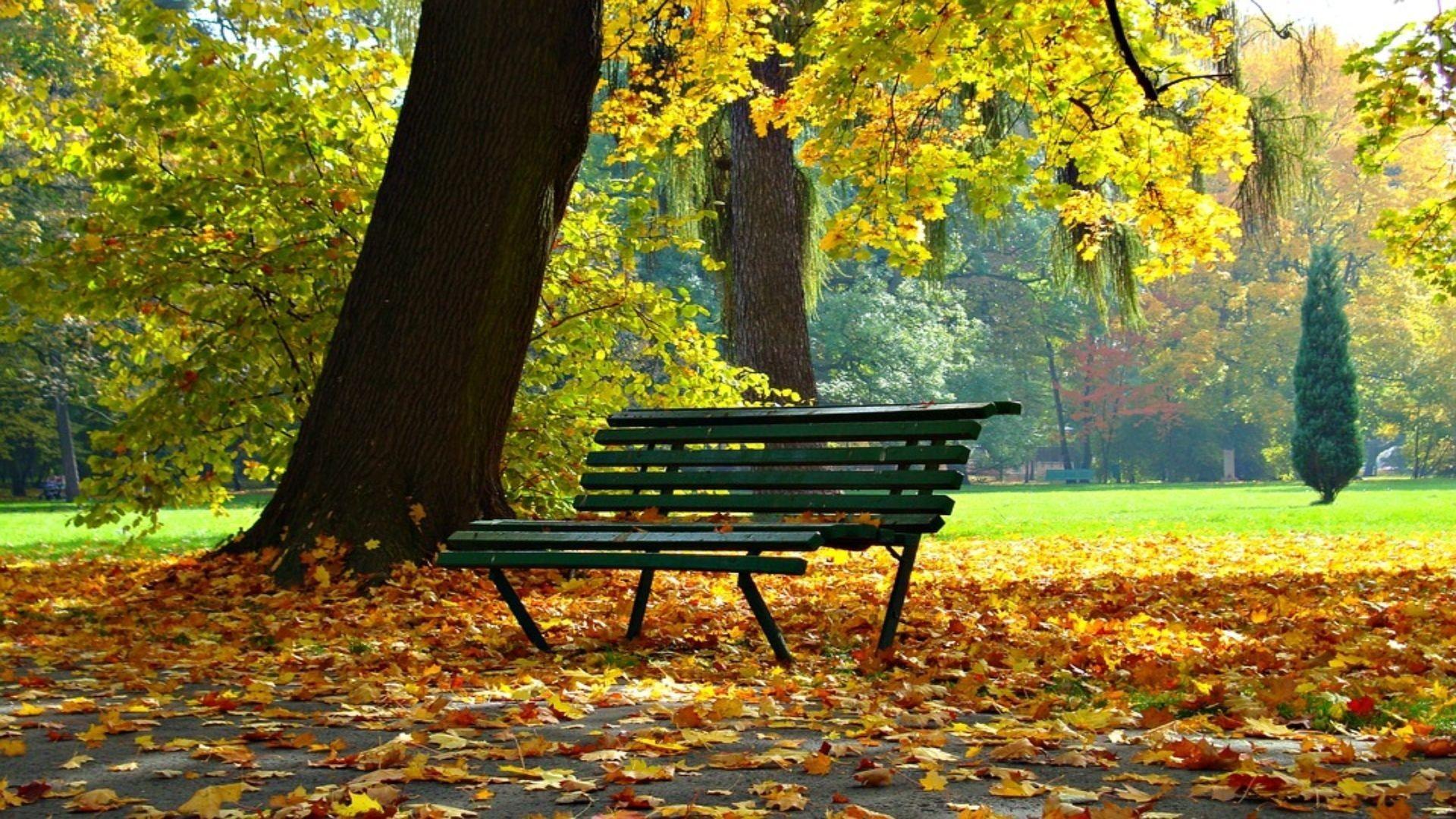 autumn-1877749_960_720 (1)
